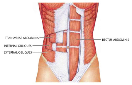 Abdominal Muscles Diagram