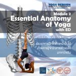 Essential Anatomy of Yoga